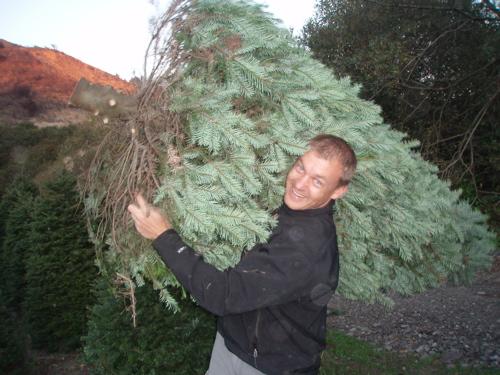 carl-tree